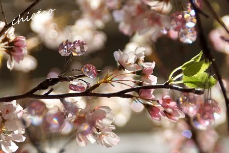 クリスタルの桜彩..6