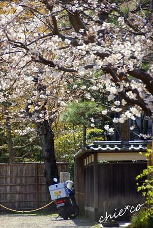 桜彩の路地の奥・・