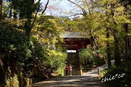 桜彩の妙本寺..26