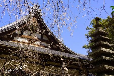 桜彩の安国論寺..9