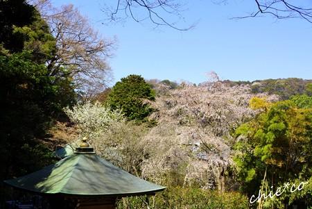桜彩の安国論寺..12