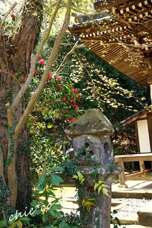 桜彩の安国論寺..16