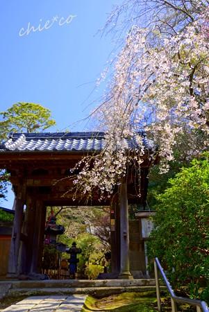 桜彩の安国論寺..24