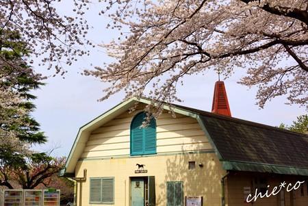 桜彩の厩舎・・