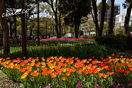 横浜公園 095