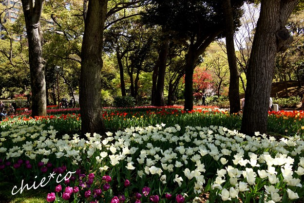 横浜公園 127