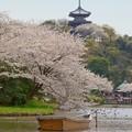 写真: 桜 Yokohama 128