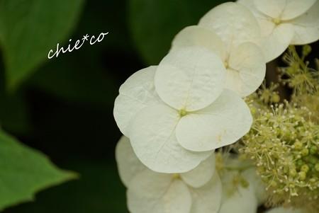北鎌倉~水無月 318