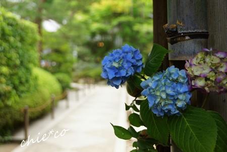 北鎌倉~水無月 102