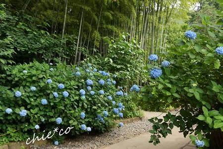 北鎌倉~水無月 112