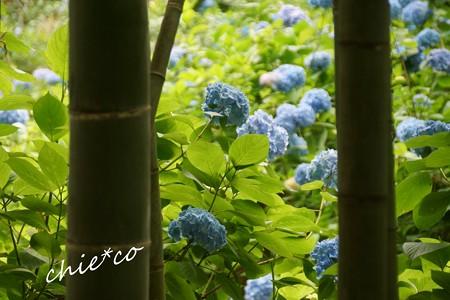 北鎌倉~水無月 116
