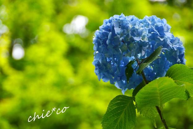 北鎌倉~水無月 125