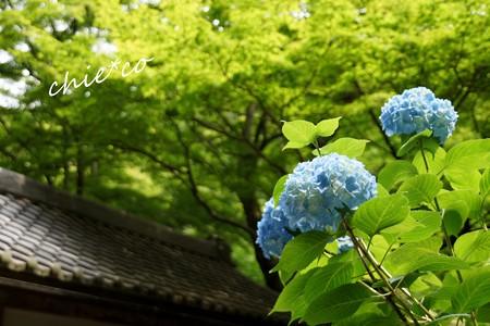 北鎌倉~水無月 122