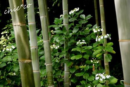 北鎌倉~水無月 139