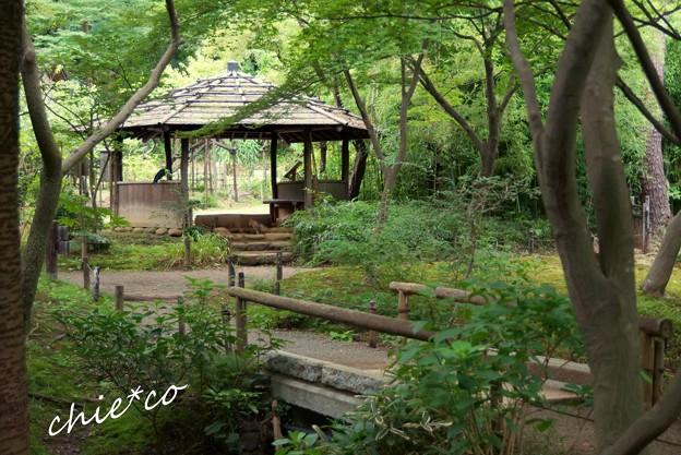 葉月の三渓園 192