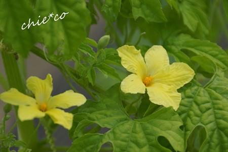 flower center 145