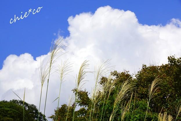 空と・・尾花と・・