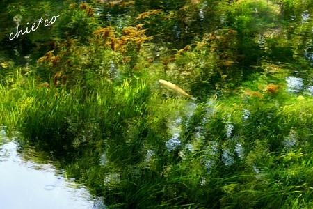 山中湖 河口湖 105