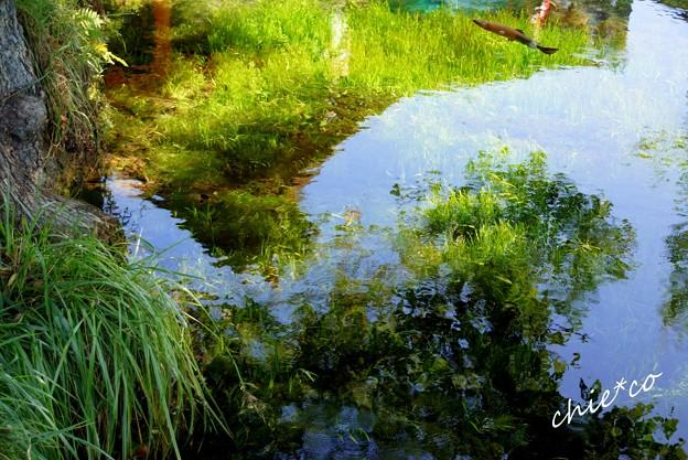 山中湖 河口湖 107