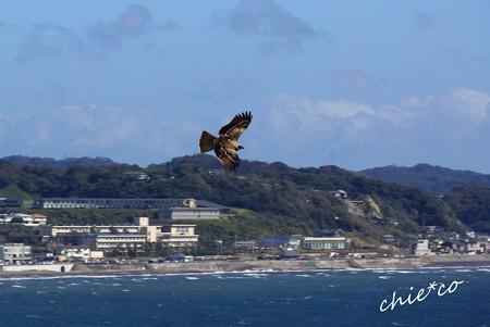 江の島-057