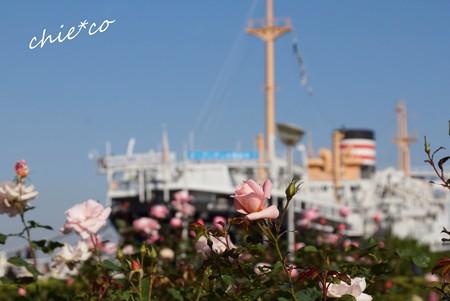 暮秋の横浜-219