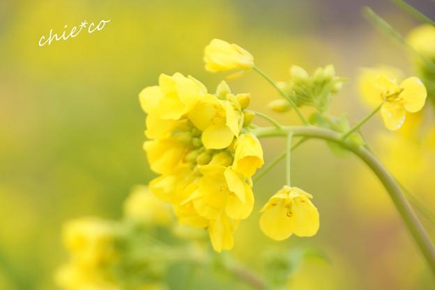 吾妻山公園-091