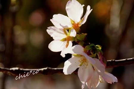 botanical garden-035