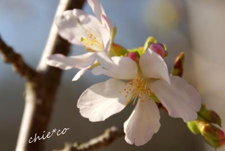 botanical garden-037