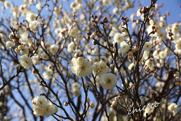 botanical garden-086