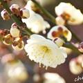 写真: botanical garden-091
