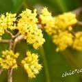 写真: botanical garden-197