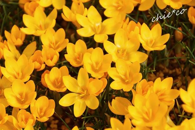 写真: botanical garden-198
