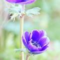 写真: botanical garden-291