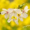 写真: botanical garden-235