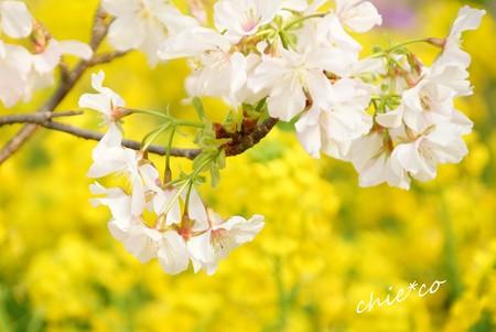 botanical garden-238