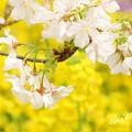 写真: botanical garden-238