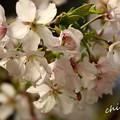 写真: botanical garden-232