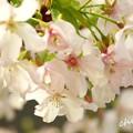 写真: botanical garden-233