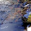 Photos: 紅梅と雪と・・白鷺池(びゃくろち)・・