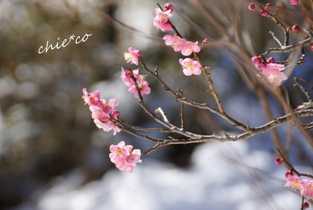 雪彩の北鎌倉-217