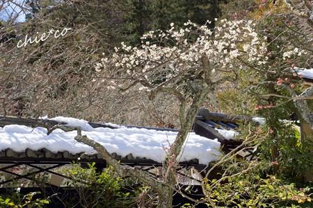 雪彩の北鎌倉-184
