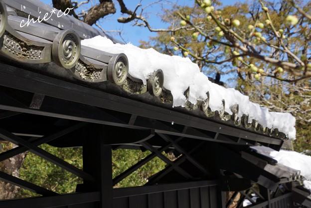 雪彩の北鎌倉-188