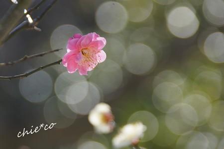 雪彩の北鎌倉-206