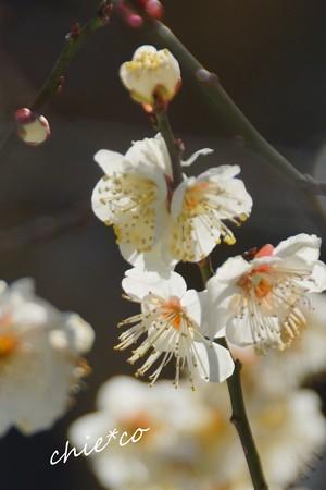 雪彩の北鎌倉-207