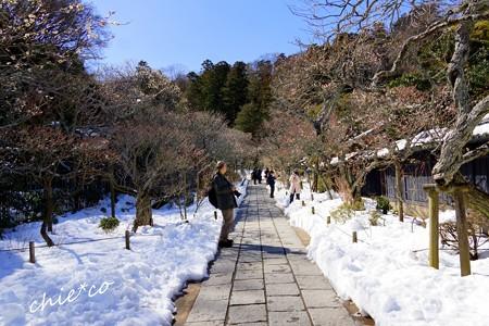 雪彩の北鎌倉-209