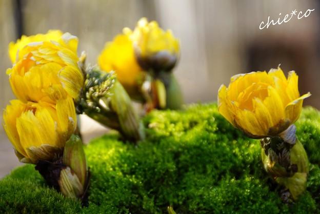 写真: botanical garden-120