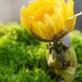 写真: botanical garden-119