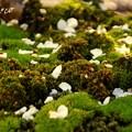 写真: botanical garden-127