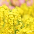 写真: botanical garden-267