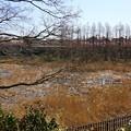 写真: 三浦海岸~河津桜-127